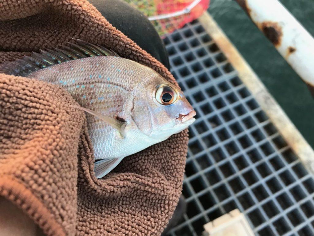 釣果のチャリコ2