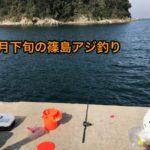 篠島アジ釣り