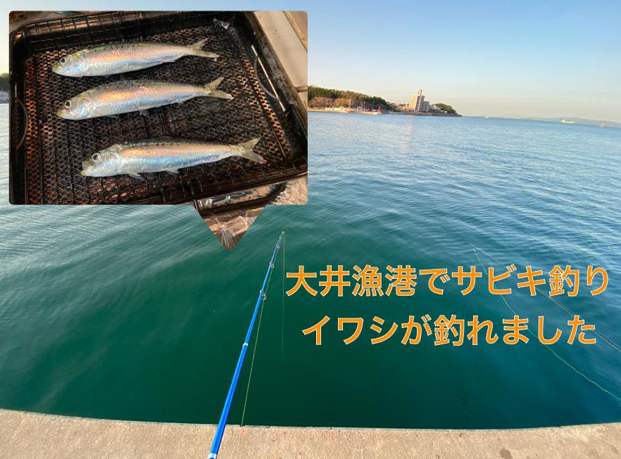 大井漁港でサビキ釣り