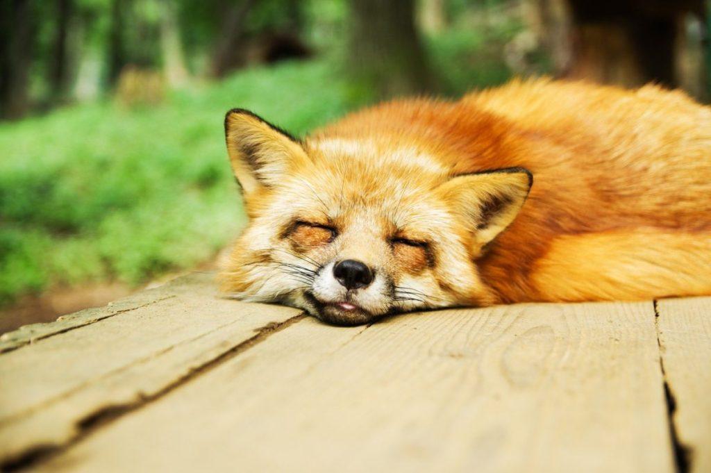 睡眠の質が向上した