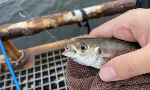 7月の知多半島釣り