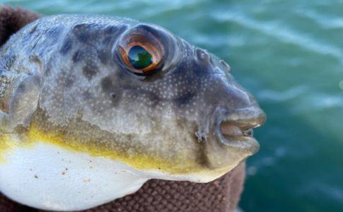 大井漁港で秋に釣りしてみた