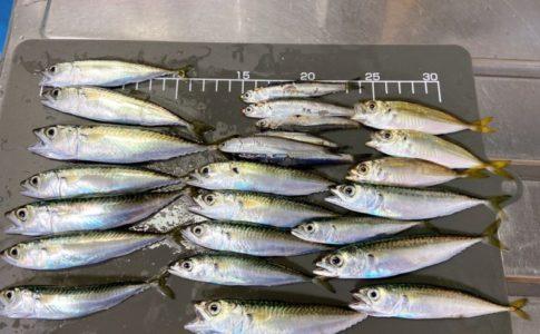武豊緑地公園の釣り結果